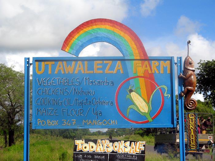 insegna-il-nostro-malawi-utawaleza-farm-fattoria-koche-africa