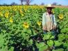 girasoli-il-nostro-malawi-utawaleza-farm-fattoria-koche-africa