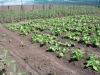 serra-il-nostro-malawi-utawaleza-farm-fattoria-koche-africa