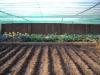 serra_3-il-nostro-malawi-utawaleza-farm-fattoria-koche-africa